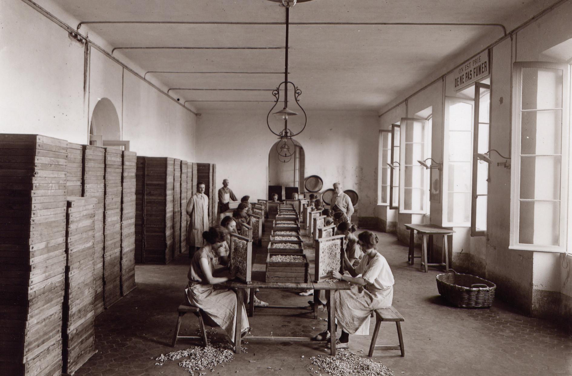 Lubin usine cannes 1924--2 (7)