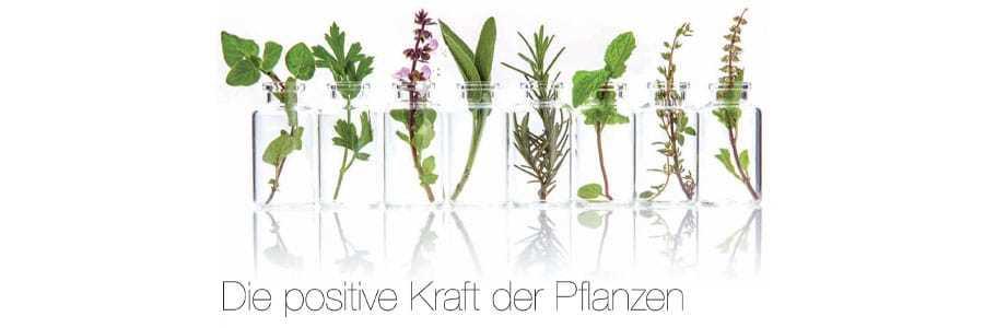 die-positivr-kraft-der-pflanzen
