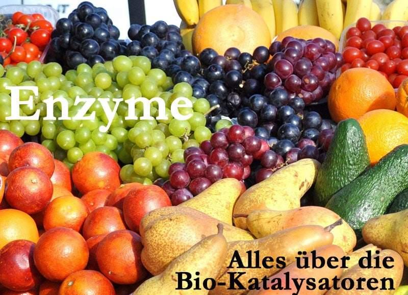 Enzyme: Zündkerzen des Stoffwechsels