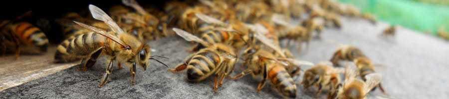 fleißige-Bienen
